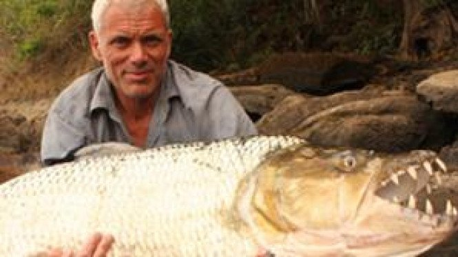 Tigerfish, ikan buas asal Afrika
