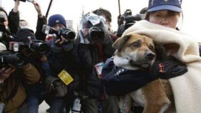 Anjing yang diselamatkan 3 minggu paska tsunami Jepang