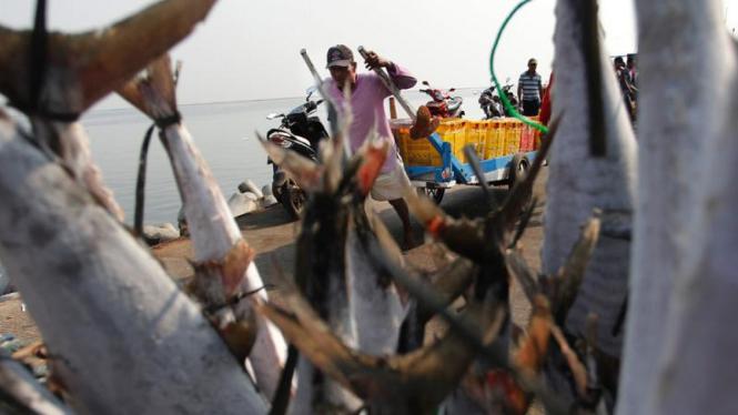 Tangkapan Nelayan Membaik