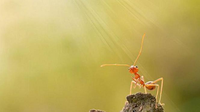 Foto semut karya Robertus Agung Sudiatmoko