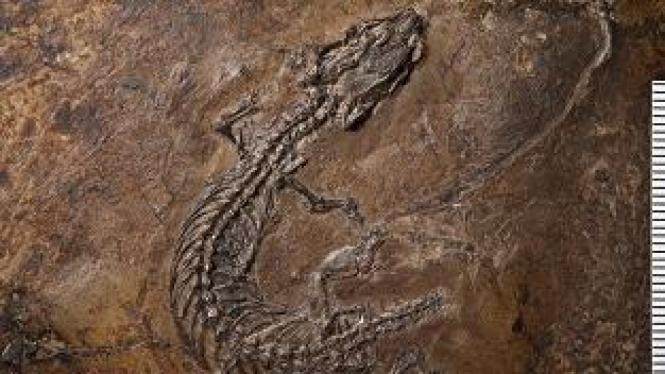 fosil kadal