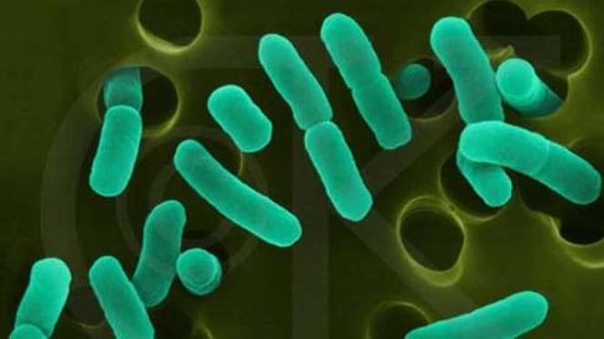 Bakteri E Coli di bawah mikroskop.