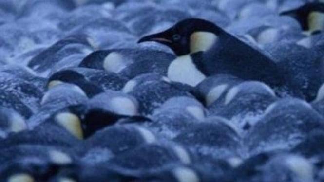 Penguin berdiri berdesakan