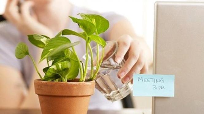 pot tanaman di meja kerja