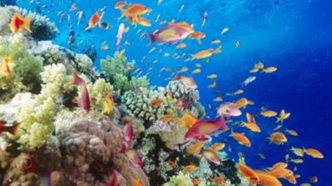 Kehidupan bawah laut