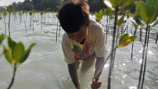 Pelestarian Mangrove di Pulau Pari