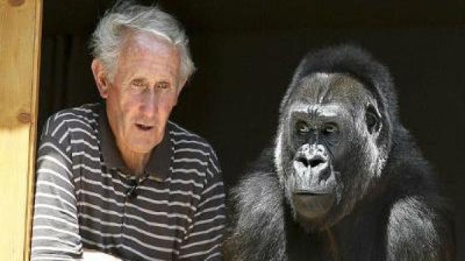 Berbicara dengan Gorilla