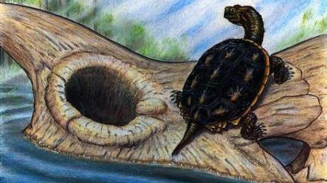 Kura-kura bertahan, Dinosaurus tidak