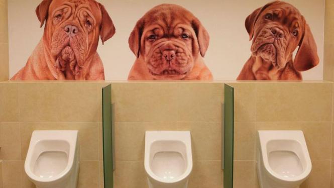 Toilet  Mewah Menjelang Piala Euro 2012