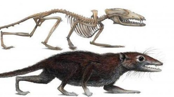 Fosil Juramaia sinensis, nenk-moyang makhluk eutheria