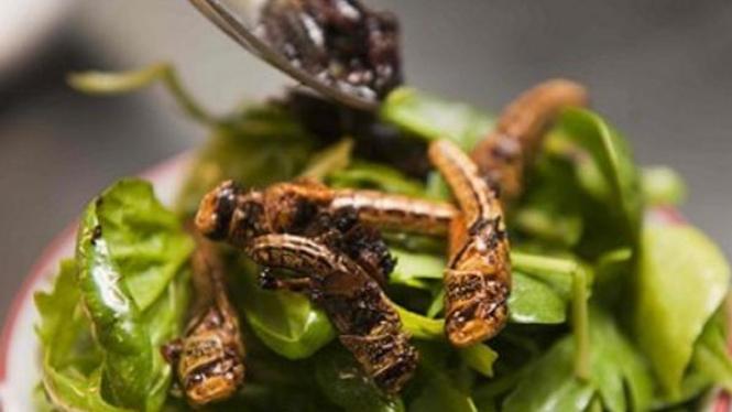 salad serangga