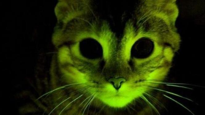 Kucing menyala dalam gelap
