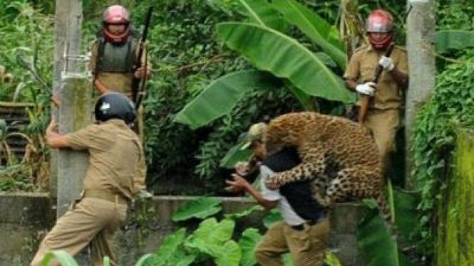 Penjaga Hutan Nusantara