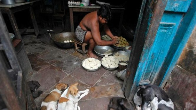 Sejumlah ekor anjing kampung di Kolkata, India