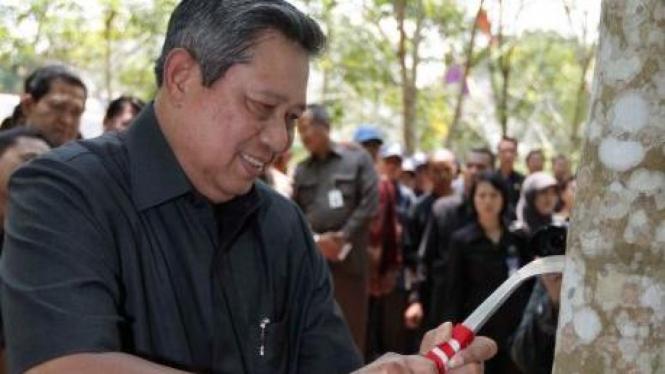 Presiden SBY menakik pohon karet untuk disadap