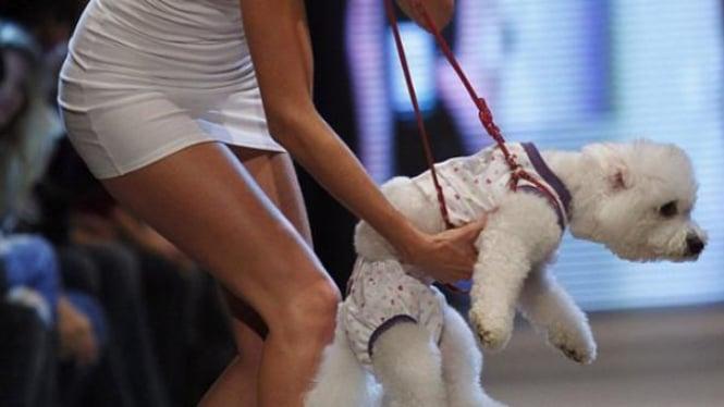 fashion show busana anjing
