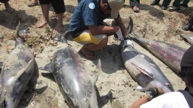 Lumba-lumba mati terdampar di Desa Ujung Jaya, Pandeglang, Banten