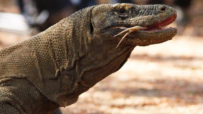 Kunjungan Jusuf Kalla ke Pulau Komodo