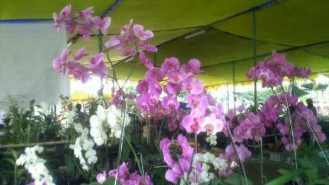 Borneo Orchid Show
