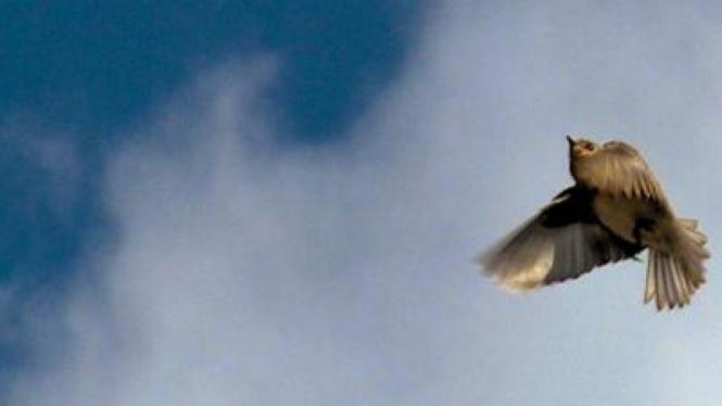 Burung terbang menghadang angin