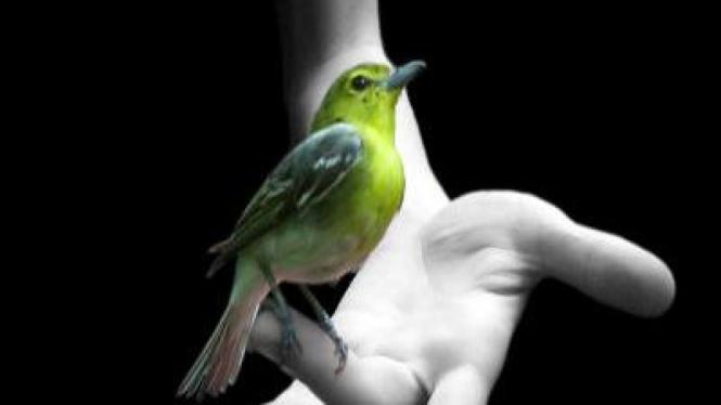 Burung pencegah bahaya
