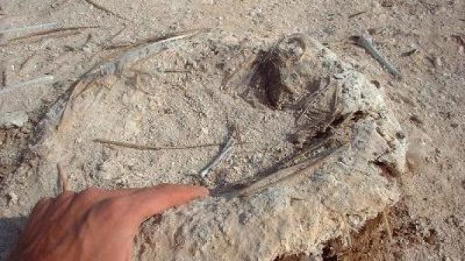 Pupuk Guano berasal burung laut dan kelalawar