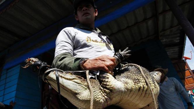 Masyarakat Thailand tangkap buaya saat banjir