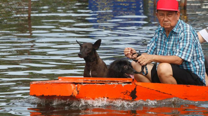 Hewan-hewan korban banjir Thailand