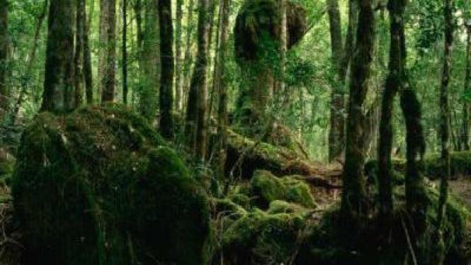Hutan Tasmania