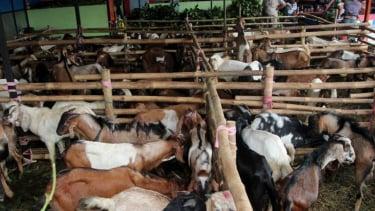 https://thumb.viva.co.id/media/frontend/thumbs3/2011/11/04/130263_penjualan-hewan-kurban_375_211.jpg