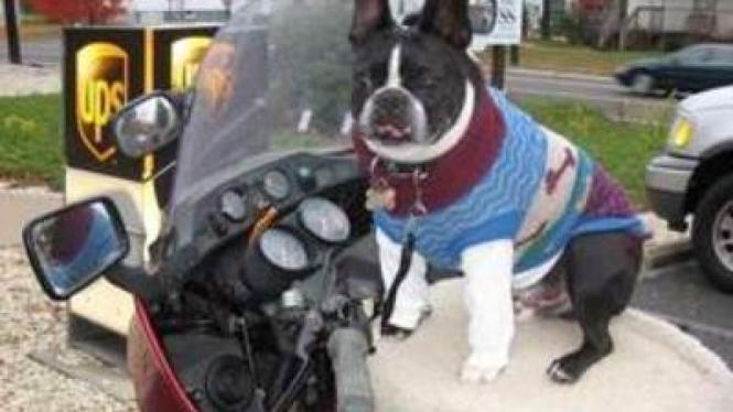 Mengemudi motor bersama hewan peliharaan