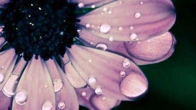 Memotret bunga