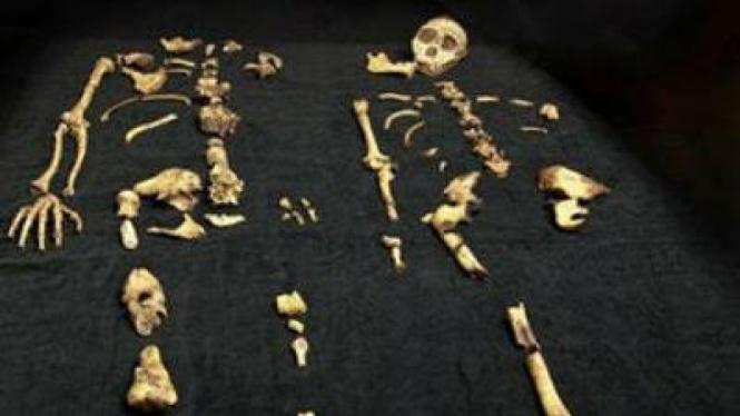 Tulang purba