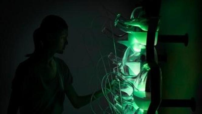 biolight