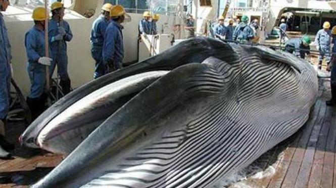 Perburuan paus oleh Jepang