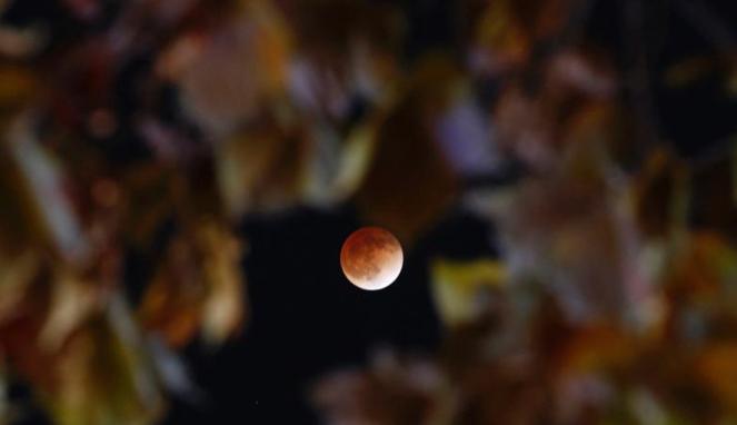 Gerhana bulan total di Korea Selatan