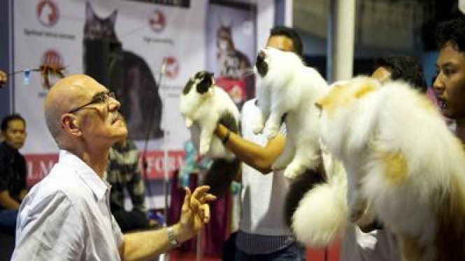 Penjurian dalam kontes kucing