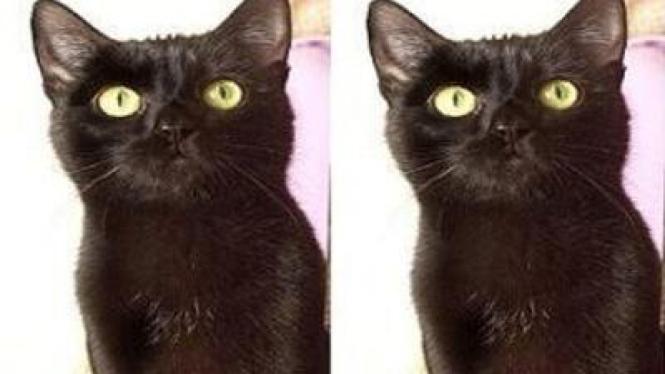 Tomaso kucing terkaya di dunia