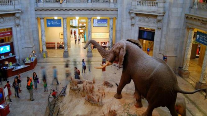 Smithsonian National Museum of Natural History, Washington, AS