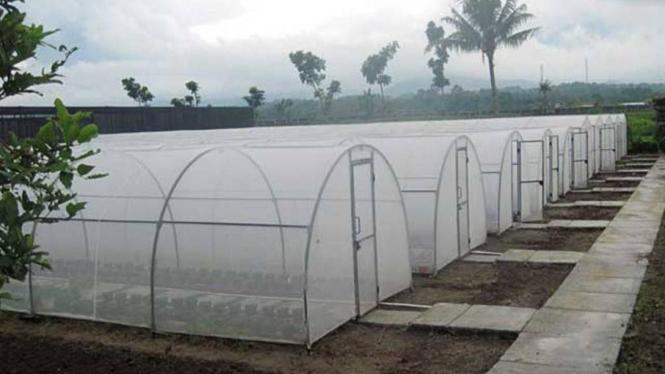 Greenhouse di Semarang