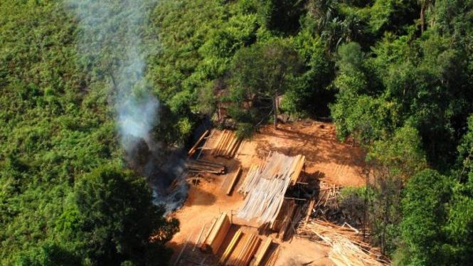 Pembalakan hutan di Pulau Padang, Meranti, Riau
