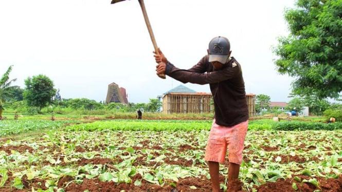 Cuaca Buruk Hambat Masa Panen Petani Jakarta