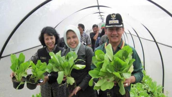 Walikota Semarang, Soemarmo, memanen sayur organik