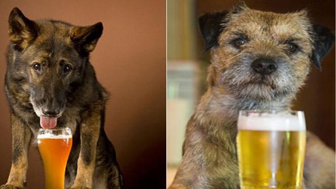 Bir untuk anjing