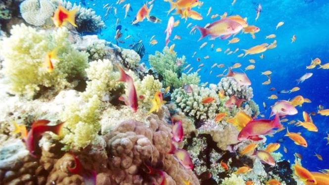 Ikan dan terumbu karang