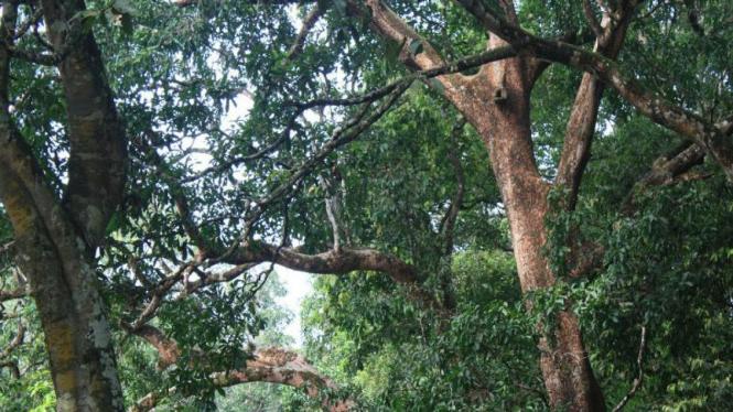 Hutan Buluhcina