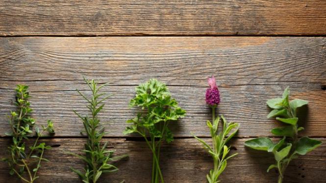 Daun herbal, Thyme, Rosemarry, Parsley, Lavender, Oregano (kiri ke kanan)