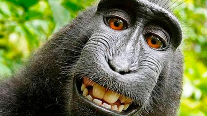 83 Gambar Monyet Lucu Terlihat Keren