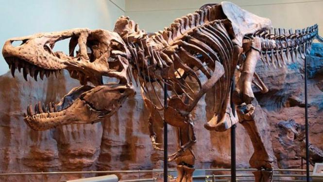 Spesimen kerangka Tyrannosaurus Rex