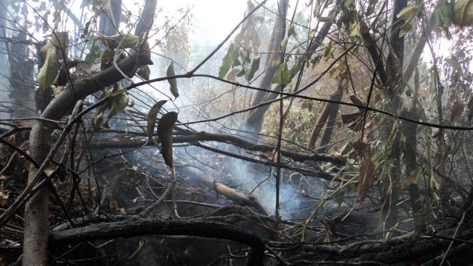 Kebakaran hutan di Jambi picu kabut asap yang terbang hingga ke Riau